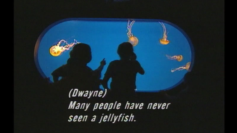 People looking through a viewport in a large aquarium at jellyfish swimming in the water. Caption: (Dwayne) Many people have never seen a jellyfish.