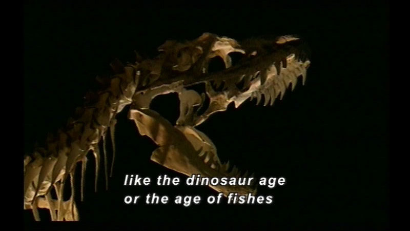 Still image from Our Earth: Fossils