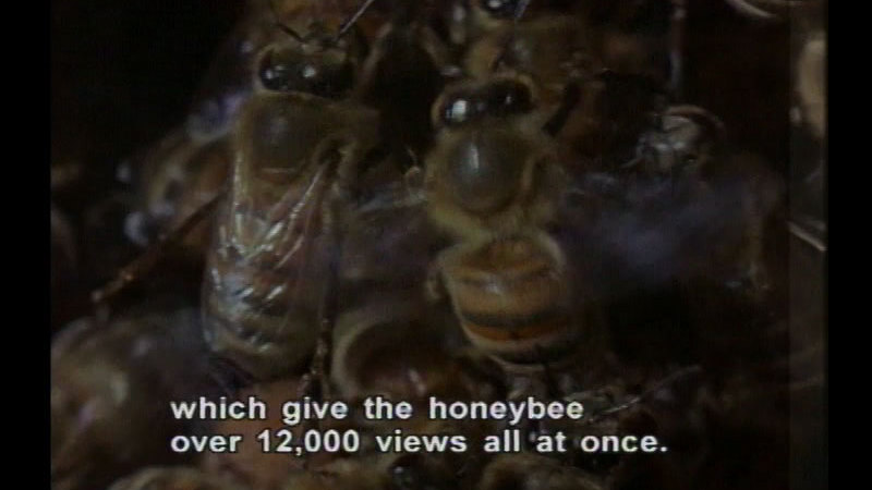 Still image from Bees & Plants
