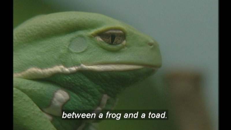 Still image from Frogs: Facts And Folklore