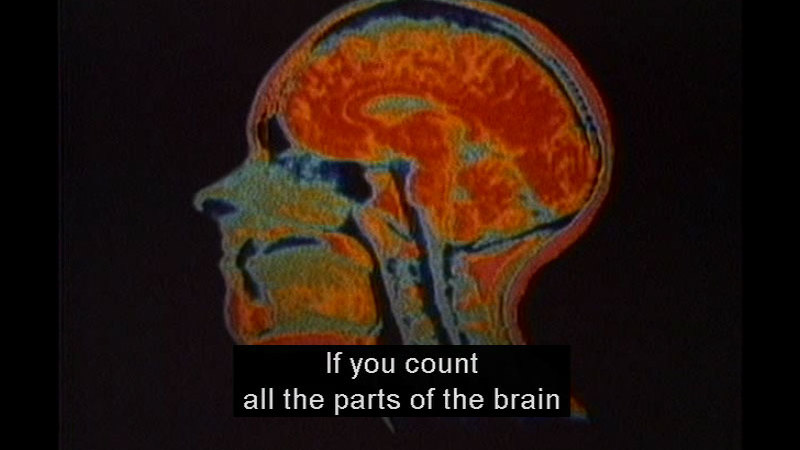 Cross section of the human head and neck in shaded colors. Caption: If you count all the parts of the brain
