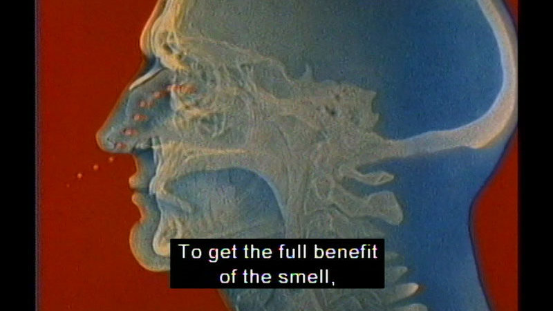 Still image from The Living Body: Eating To Live