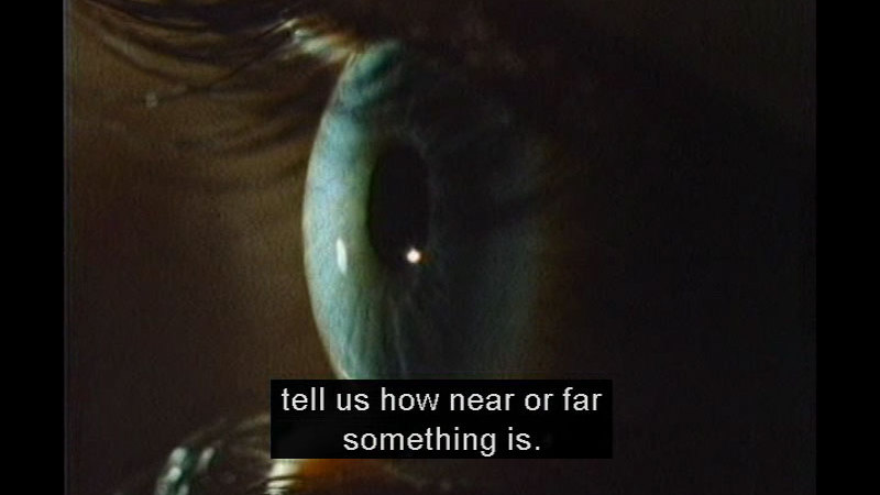 Still image from The Living Body: Eyes And Ears