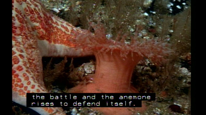 Still image from Starfish Ecological Communities