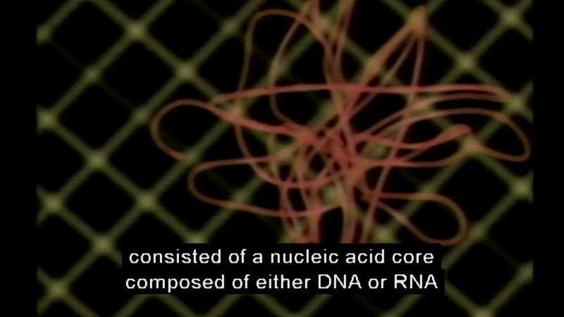 Tangle of thread-like substance. Caption: consisted of a nucleic acid core composed of either DNA or RNA