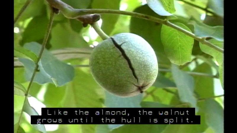 Still image from Nuts