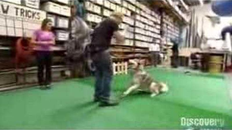 Still image from: Dog Myths