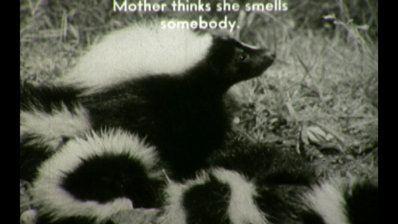 Still image from: The Adventures of Willie Skunk