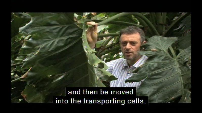 Still image from Transportation Systems In Plants