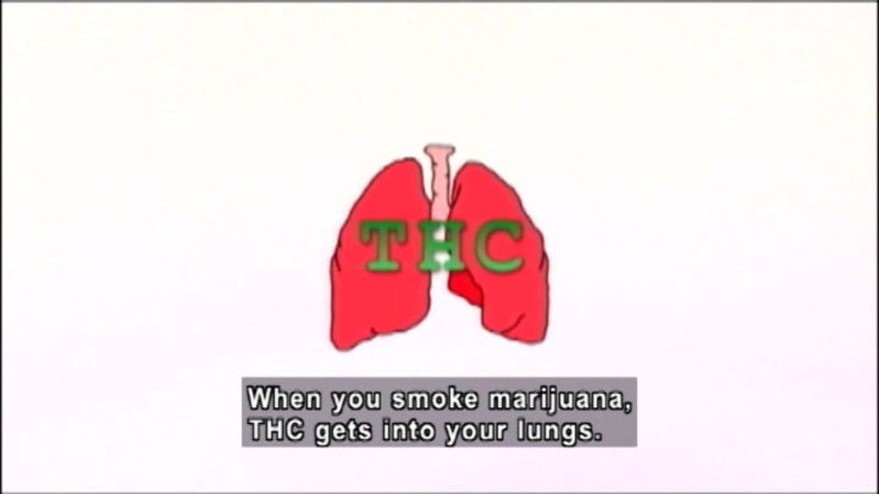 Still image from: Totally True Facts About Marijuana