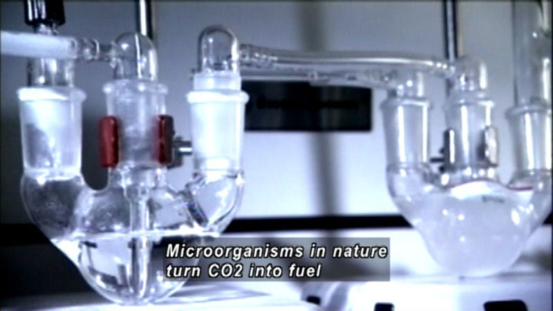 Science lab equipment with reserviors and tubing. Caption: Microorganisms in nature turn CO2 into fuel.
