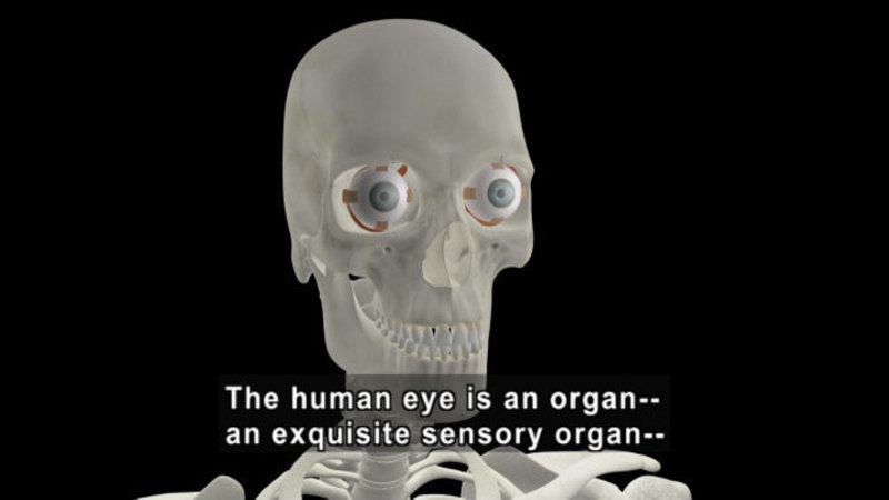 Still image from Miracle Of The Human Body: The Sensory System
