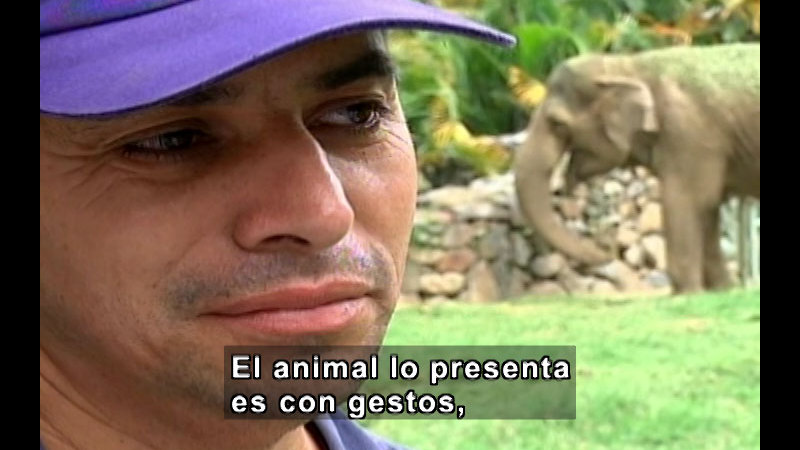 Still image from Vox Populi-Zoology (Spanish)