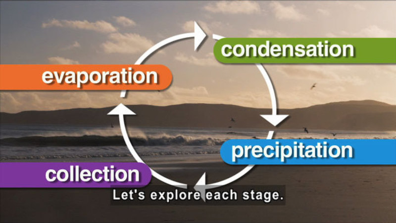 Cycle showing evaporation, condensation, precipitation, and collection. Caption: Let's explore each stage.