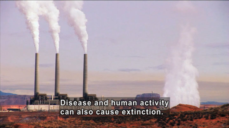Industrial plant with smokestacks emitting pollutants. Caption: Disease and human activity also cause extinction.
