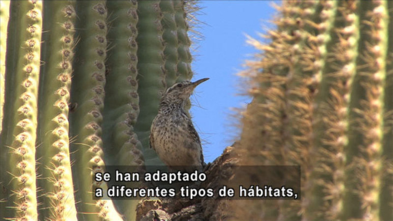 Still image from Science Video Vocab: Adaptation (Spanish)
