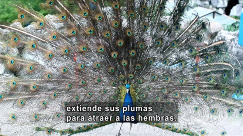 Still image from Science Video Vocab: Instinct (Spanish)