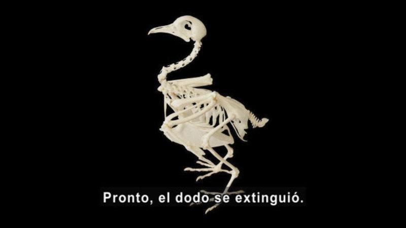 Skeleton of a bird. Spanish captions.