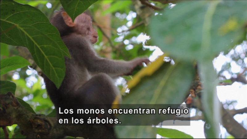 Still image from Science Video Vocab: Mammal (Spanish)