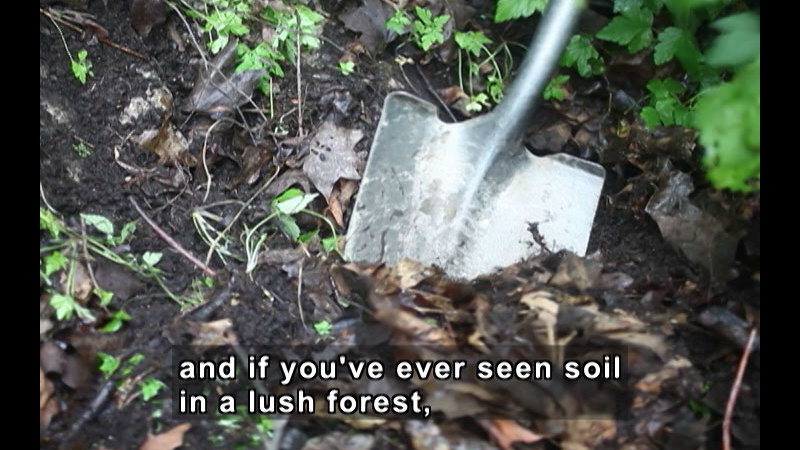 Shovel partially sunk into dark brown soil. Caption: and if you've ever seen soil in a lush forest,