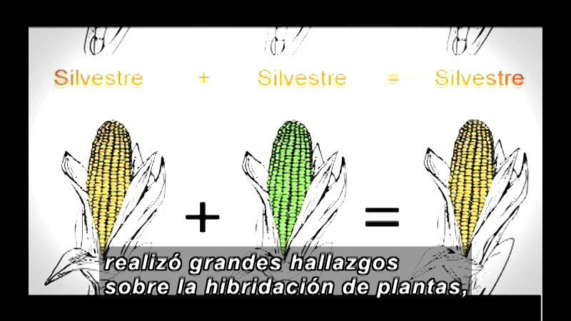Still image from Science and Technology--Biotechnology Part 1 (Spanish)