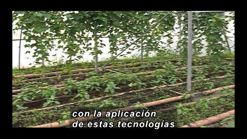Still image from Science and Technology--Biotechnology Part 2 (Spanish)