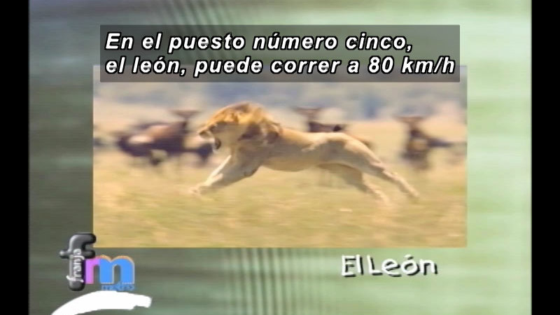Still image from Franja Metro: Fast Animals (Spanish)
