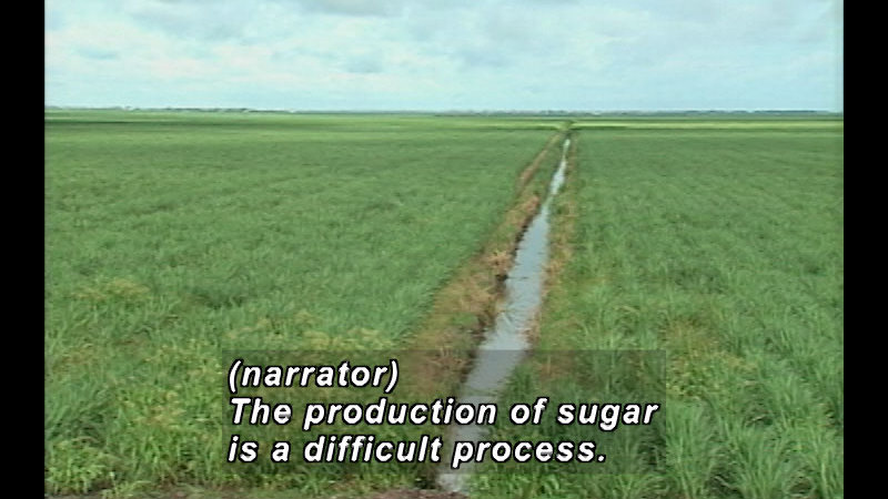 Still image from: How Sweet It Is: The Story of Sugar