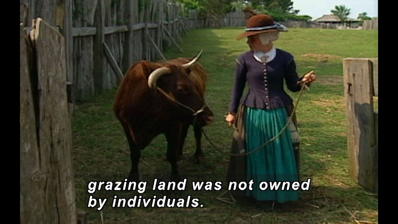 Still image from: Domesticated Bliss: The Story of Livestock in America