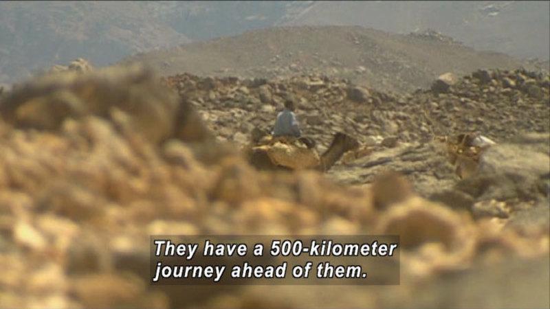 Still image from: Nomads: Salt Caravans in the Niger