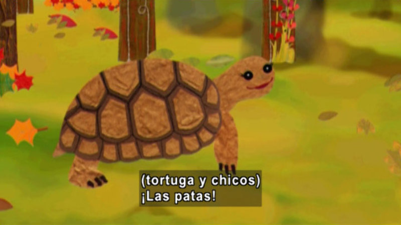 An illustrated turtle. Spanish captions.