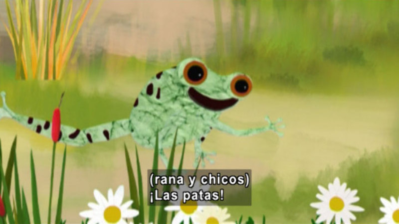 An illustrated frog with rushes and daisies. Spanish captions.
