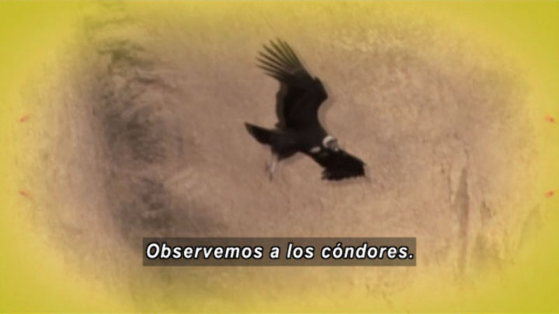 Still image from Animapaka: Condor (Spanish)
