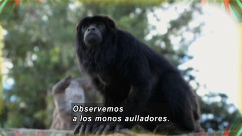 Still image from Animapaka: Monkey (Spanish)