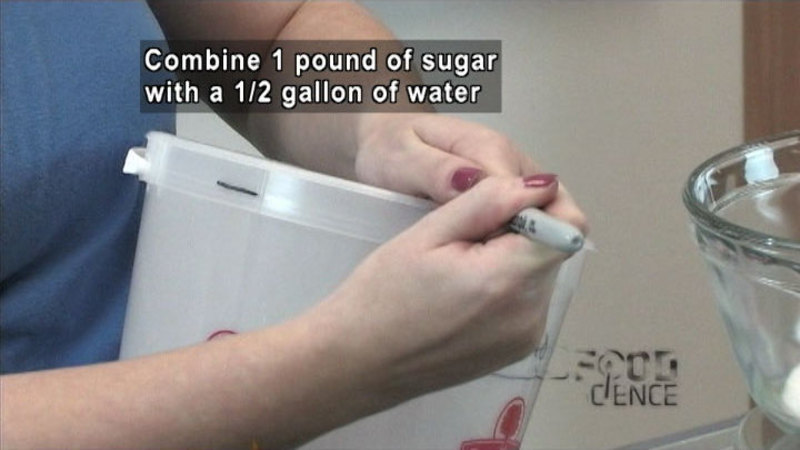 Person marking a spot near the lip of a round plastic container. Caption: Combine 1 pound of sugar with 1/2 gallon of water