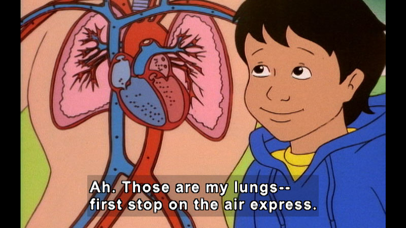 Cartoon of a person looking at a diagram of the cardiovascular system of a human. Caption: Ah. Those are my lungs -- first stop on the air express.