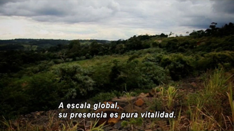 Still image from How Deforestation Impacts Climate (Spanish)