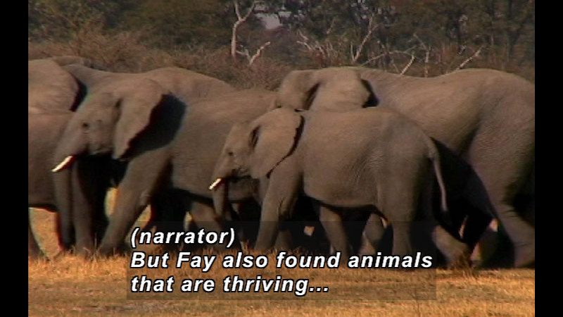 Still image from Wild Chronicles: Saving Africa's Wildlife