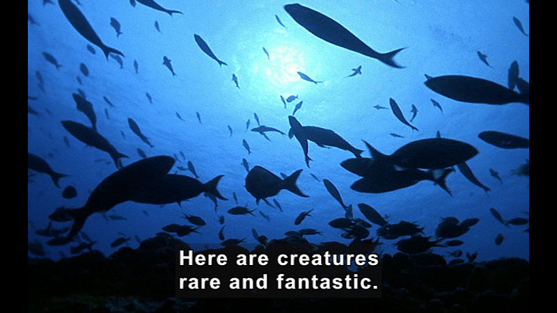 Multiple species of fish swimming in water as seen from below. Caption: Here are creatures rare and fantastic.