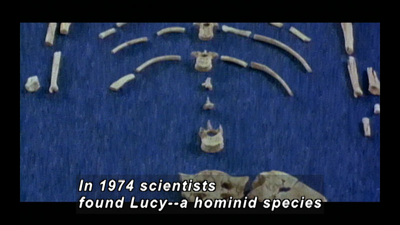 Still image from Wild Chronicles: Fossils in the Great Rift Valley