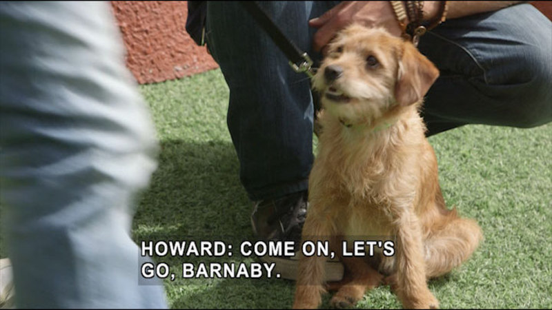 Still image from Lucky Dog: Barnaby