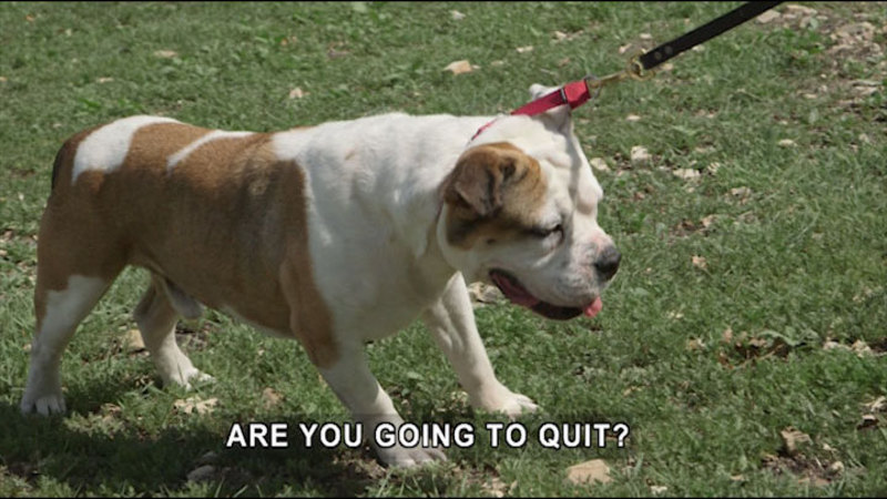 Dog with feet planted, not moving while the leash is being pulled forward. Caption: Are you going to quit?