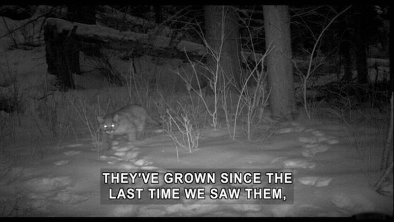 Still image from Expedition Wild: Stalking the Mountain Lion