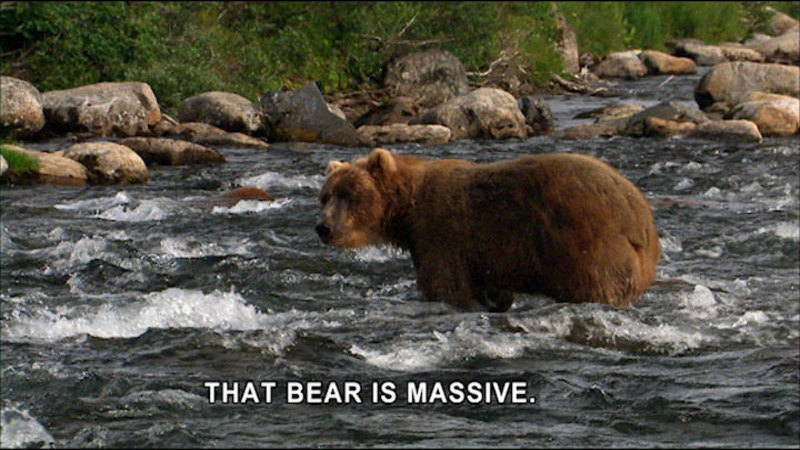 Still image from Expedition Wild: Project Kodiak