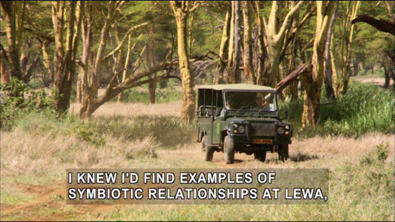 Two people in an open-sided vehicle driving on a dirt road through trees and brush. Caption: I knew I'd find examples of symbiotic relationships at Lewa,