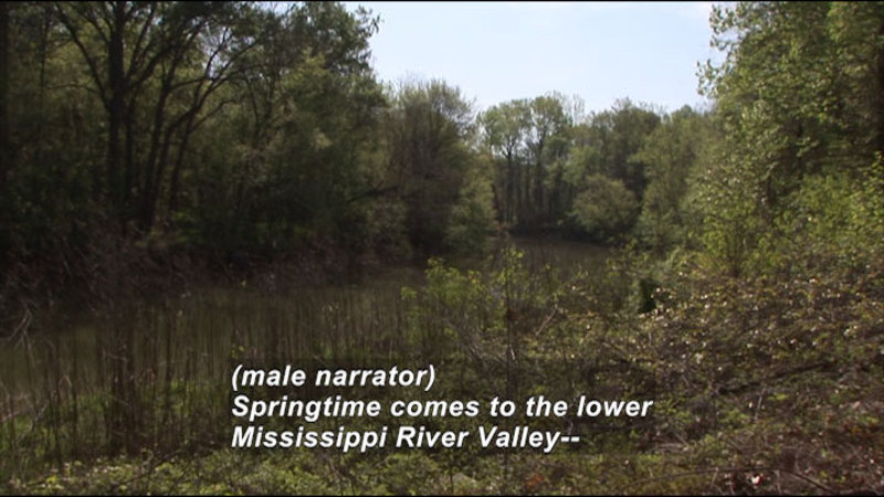 Still image from: Poverty Point National Monument