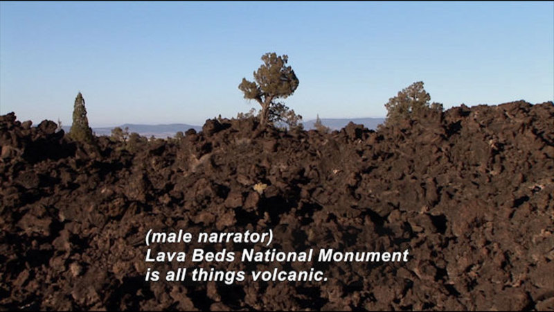 Rough lava rocks with a few trees growing out of them. Caption: (male narrator) Laval Beds National Monument is all things volcanic.