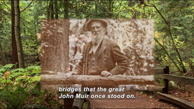 Wooden fence lining a path through a forest. Black and white photo of a man overlaid. Caption: bridges that the great John Muir once stood on.