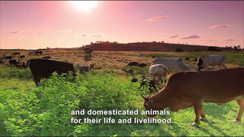 Still image from: Social Studies Video Vocab: Agrarian Society