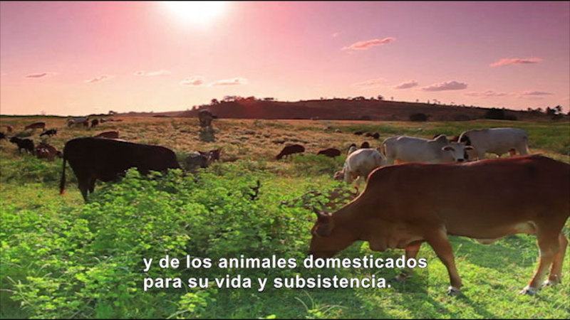Still image from: Social Studies Video Vocab: Agrarian Society (Spanish)